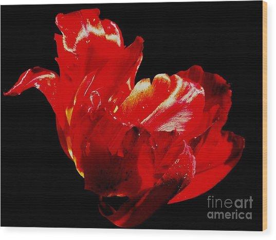 Tulipe Wood Print by Sylvie Leandre