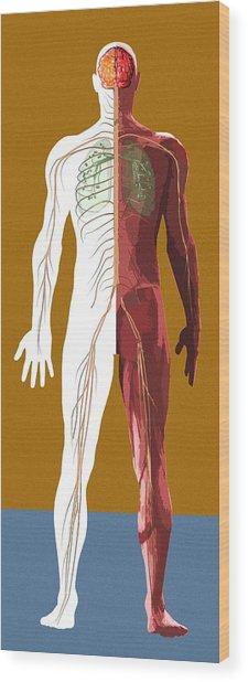 Human Anatomy, Artwork Wood Print by Mehau Kulyk