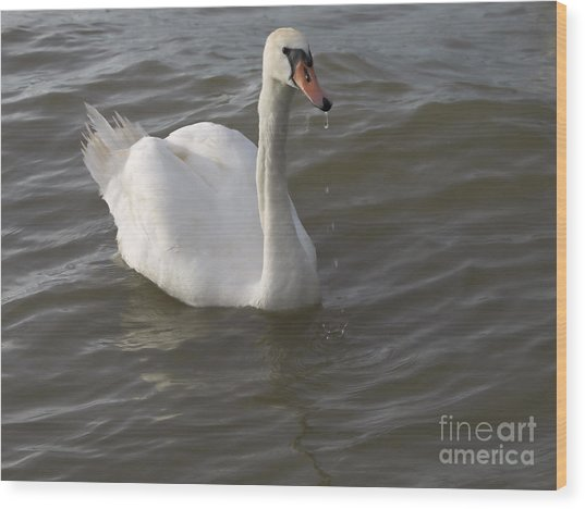 Swan Wood Print by Odon Czintos
