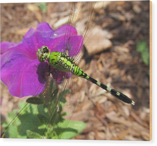 Dragonfly Wood Print by Michele Caporaso