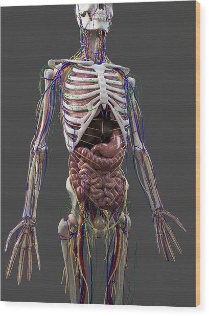 Human Anatomy, Artwork Wood Print by Sciepro