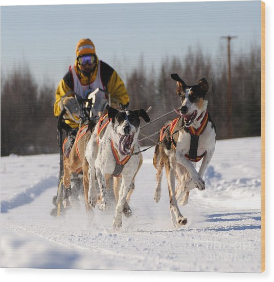 2011 Limited North American Sled Dog Race Wood Print