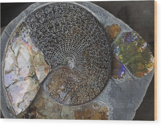 Ammonite Fossil Wood Print by Dirk Wiersma