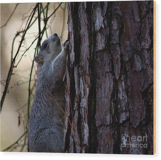 Delmarva Fox Squirrel Wood Print
