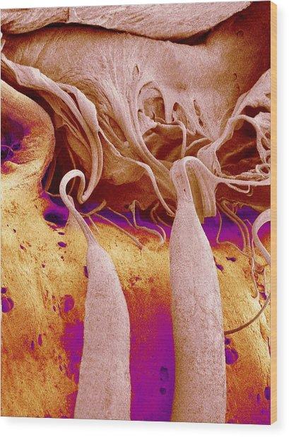 Heart Valve And Strings, Sem Wood Print by Susumu Nishinaga