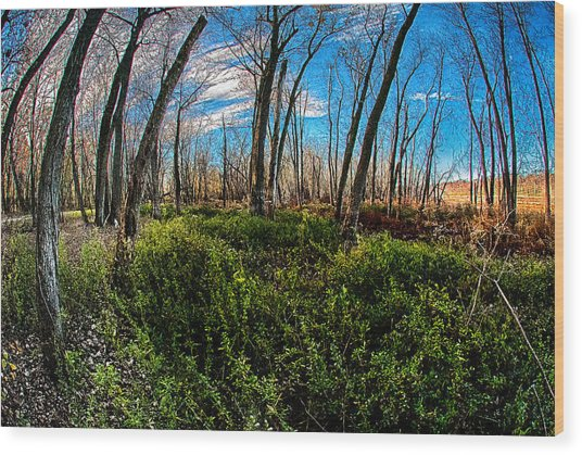 Illinois River Bottoms Wood Print