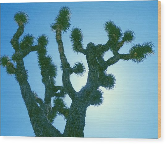 Joshua Tree Silhouette Wood Print by Claire Plowman