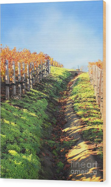 Late Autumn In Napa Valley Wood Print by Ellen Cotton