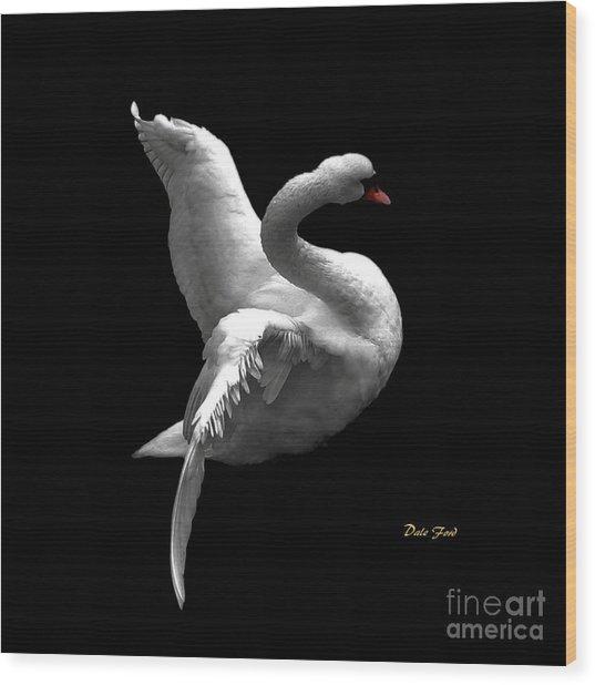 Majestic Swan 2 Wood Print