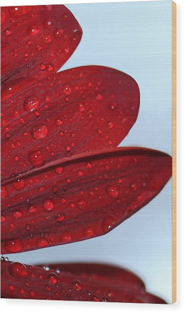 Raindrops On Red Flower Wood Print
