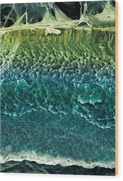 Retina, Sem Wood Print by Steve Gschmeissner