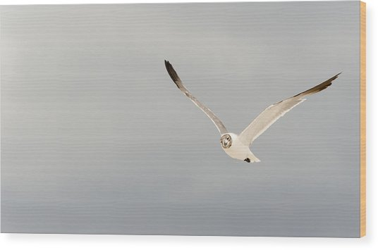 Seagull Wood Print by Mike Rivera
