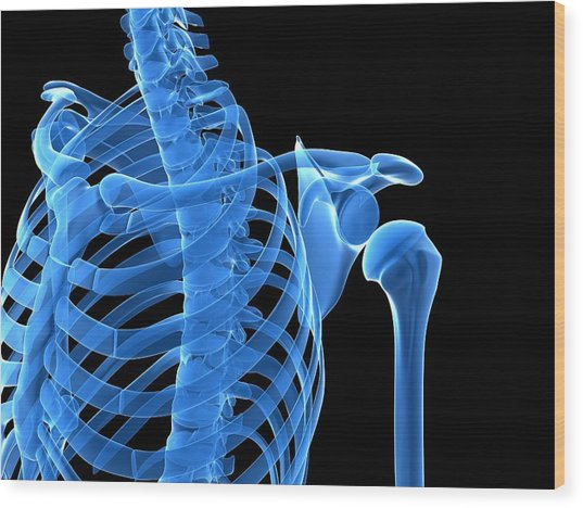 Shoulder Bones, Artwork Wood Print by Sciepro