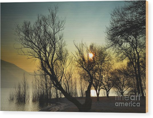 Sunlight Between The Trees Wood Print