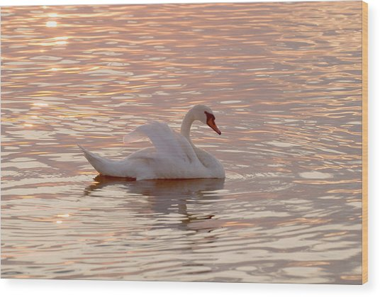 Swan In The Lake Wood Print
