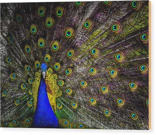 Peacock Wood Print by Brian Stevens