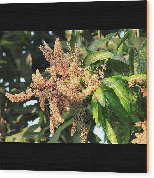 أزهار شجرة المانجو، Wood Print