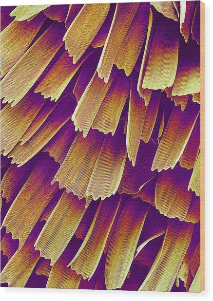 Butterfly Wing, Sem Wood Print by Susumu Nishinaga