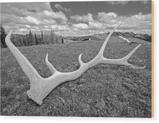 Elk Wood Print by Elijah Weber