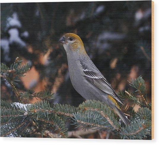 Female Pine Grosbeak Wood Print