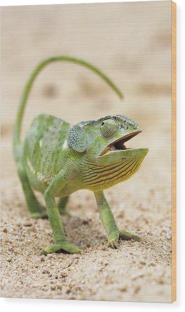 Flap-necked Chameleon Wood Print by Georgette Douwma
