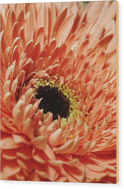Flower Close Up Wood Print by Ignaz Uri