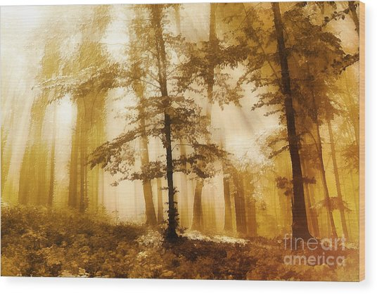Golden Forest  Wood Print by Odon Czintos