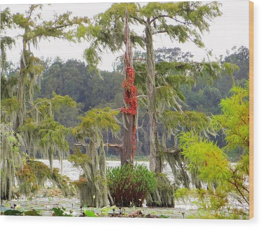 Lake Martin Scene Wood Print by Betty Berard