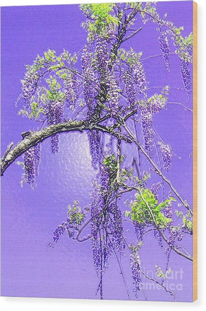 Purple Passion Wisteria Wood Print