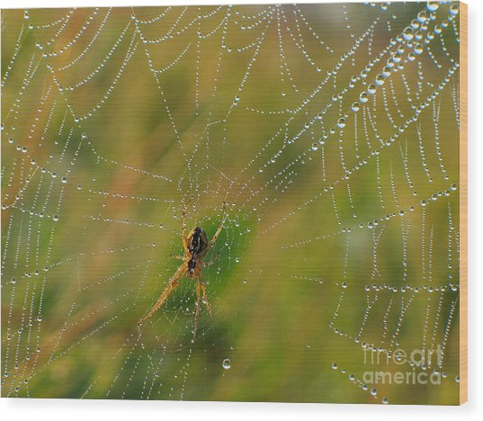 Spiderweb Wood Print by Odon Czintos