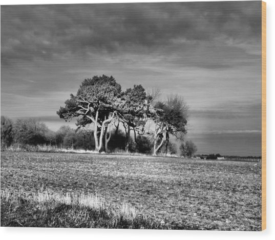 3 Trees Wood Print