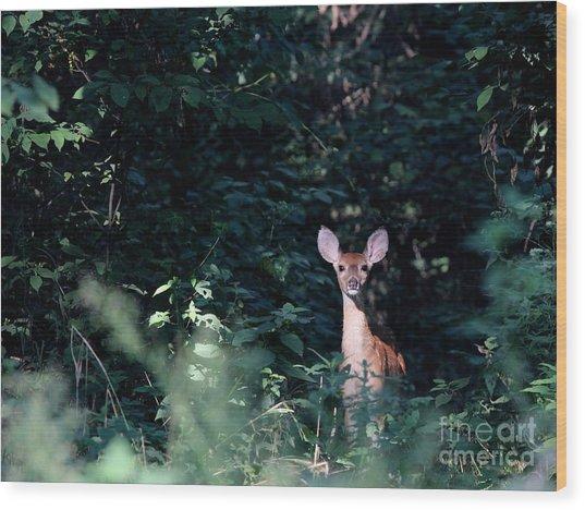 White-tailed Deer Wood Print by Jack R Brock
