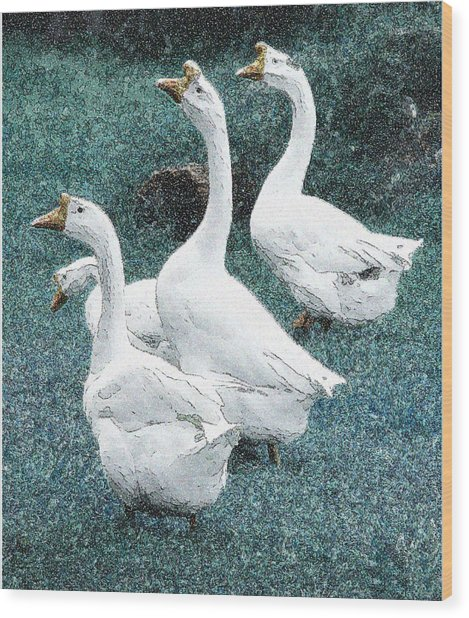 4 Ducks Wood Print