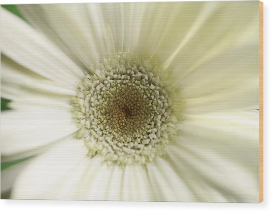 Flower Wood Print by Falko Follert