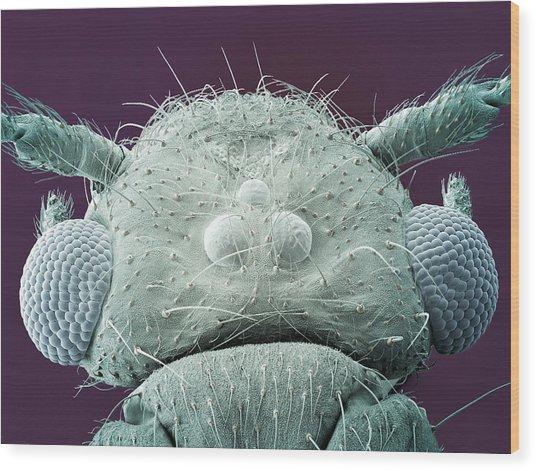 Fly, Sem Wood Print by Steve Gschmeissner