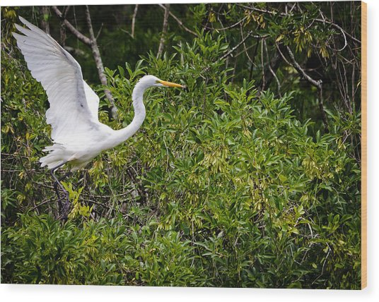 Great Egret Wood Print by Mike Rivera
