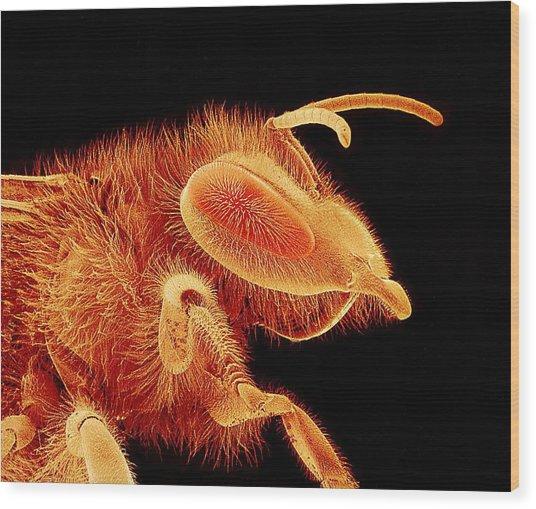 Honey Bee, Sem Wood Print by Susumu Nishinaga