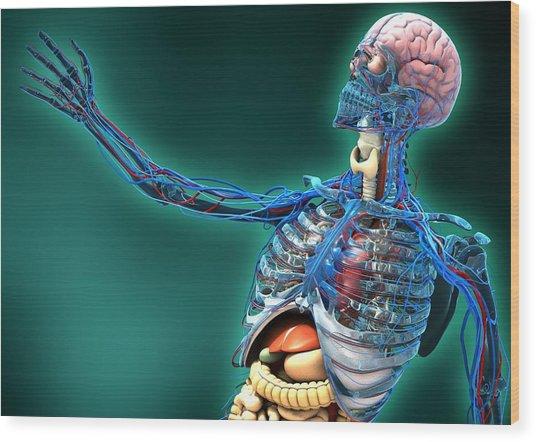 Human Anatomy, Artwork Wood Print by Carl Goodman