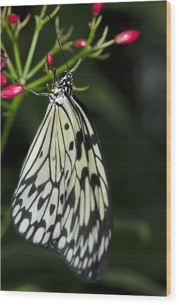 Rice Paper Butterfly Wood Print