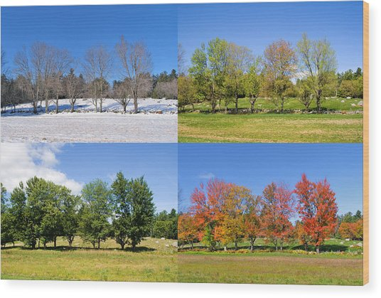 4 Season Trees Wood Print