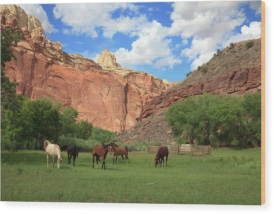 Capitol Reef National Park Wood Print by Southern Utah  Photography