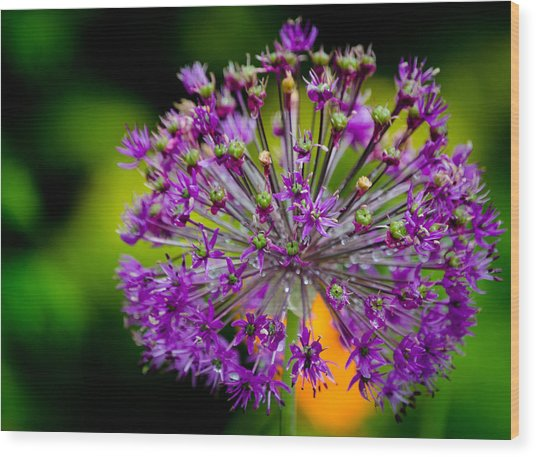 Flowers Wood Print by Mike Rivera