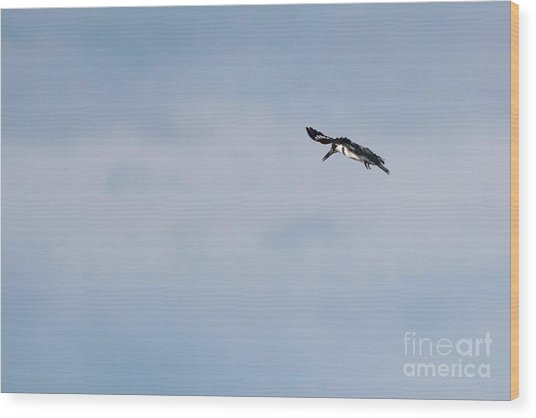 Belted Kingfisher Wood Print by Jack R Brock