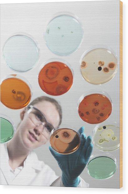 Microbiology Research Wood Print by Tek Image