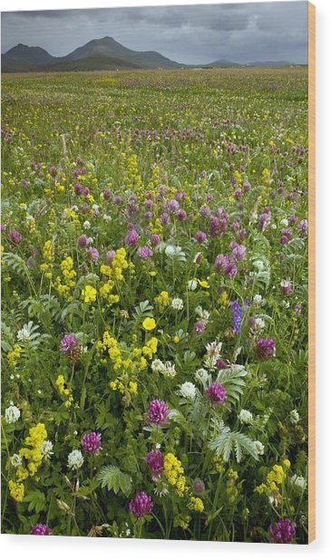 Wildflower Meadow Wood Print by Bob Gibbons