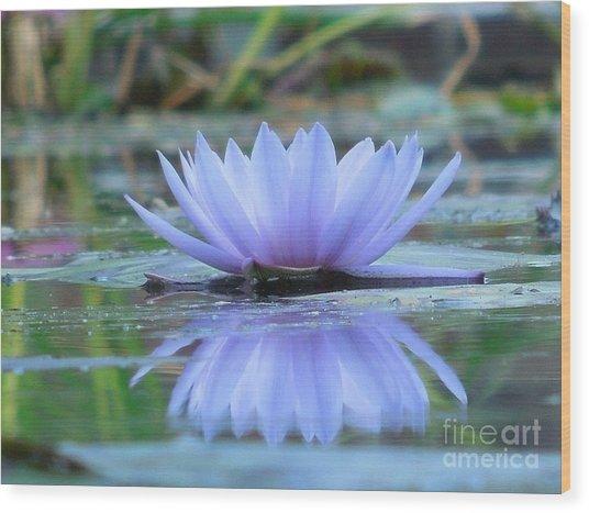 A Beautiful Water Lily Reflection Wood Print