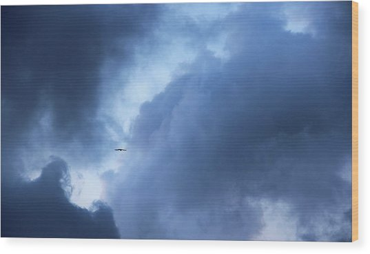 A Bird Flying In Cloudy Sky Wood Print by Gal Ashkenazi
