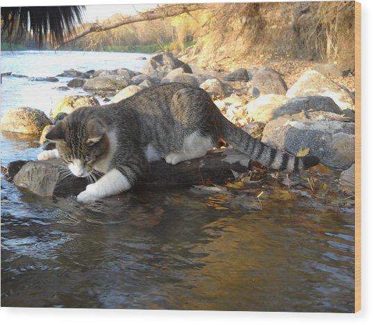 A Cat Goes Fishing Wood Print