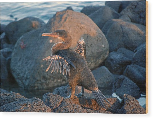A Cormorant At Sunset Wood Print