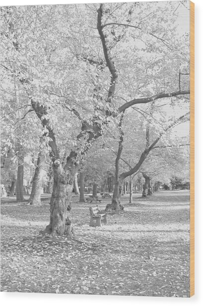 A Fall Day In Black And White Wood Print